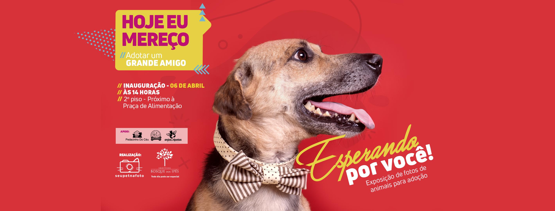 """Projeto """"Esperando por Você"""" expõe fotos de pets para adoção no Bosque dos Ipês"""